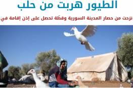 هم نازحون أيضاً.. بالصور: عصافير هربت من حصار حلب وقطّة تحصل على إذن إقامة في ألمانيا