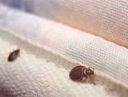 كيف تكتشف حشرات البق تحت سريرك؟