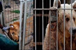 نقل الحيوانان الناجيان من الموصل الى الاردن
