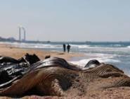 إسرائيل: التسرب النفطي أمام شواطئنا مرتبط بإيران وهو حادث إرهابي