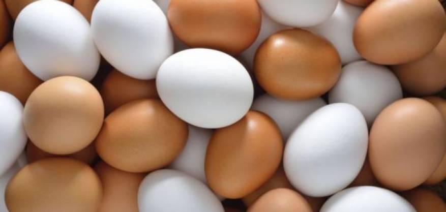 أنواع_البيض