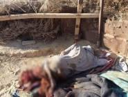 """مصر : مقتل 10 متشددين من تنظيم """"داعش"""" في العريش شمال سيناء"""