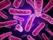 البكتريا ضيفٌ ثقيل في الجسم يمكن التخلُّص منه........انتبه لجلدك ودرجة حرارتك