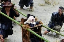 يوم يجلس الكلب على العرش.. قرية صينية تقيم احتفالاً سنوياً بطقوس غريبة