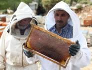 حرائق الغابات في تركيا تتسبب في تراجع إنتاج العسل