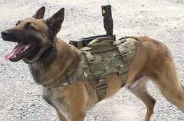 صحافة إيرانية: تنظيم الدولة فخخ مئات الكلاب السائبة