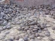 بالهند العثور على 6000 سلحفاة في منزل مهرب