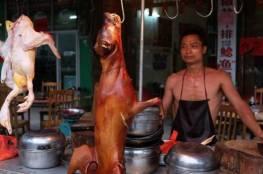 صور: انطلاق مهرجان أكل لحوم الكلاب في الصين