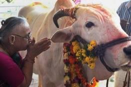 قتلى في الهند بسبب ذبح حيوان مقدس