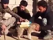 """فيديو:""""الكلب الانتحاري""""أداة داعش الجديدة"""