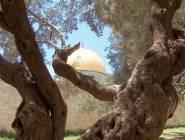 """مبادرة متطرفة لتنظيم احتفالات """"البلوغ اليهودي"""" في الأقصى"""