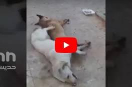 فيديو لقتل كلاب بالسم في لبنان يثير غضباً شعبياً