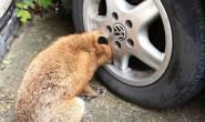 ما وجده داخل اطار سيارته أصابه بالصدمة!