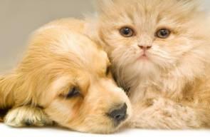 الفرق بين القطط و الكلاب