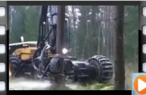 هكذا تباد الغابات!!
