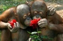 الصين| تدشن أكبر مركز لاستنساخ الحيوانات في العالم