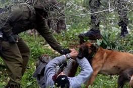 كلاب الاحتلال البوليسية تنهش جسد الأسير محمد العزة