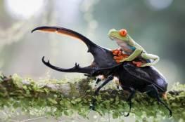 في اللحظة المناسبة: 50 صورة رائعة من الحياة البرّية