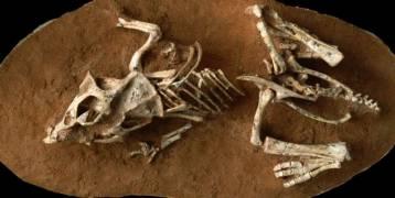 كم تستغرق بيضة الدايناصور لتفقس؟؟