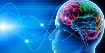 دراسة : الدماغ يتوقف عن إنتاج خلايا الذاكرة من سن 13 عاماً