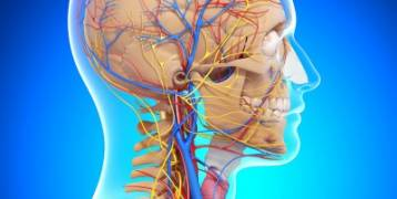 تقوية الجهاز العصبي بهذه البدائل الطبيعية