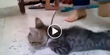 فيديو بشع يشعل مواقع التواصل الاجتماعي حول قيام فتيات بتعذيب قطة وقتلها
