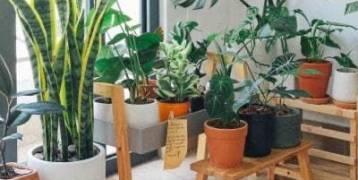 كيف أحمي النباتات  في فصل الشتاء