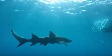 صور| ممثلة تتعرض لهجوم من أسماك القرش أثناء تصويرها أحد الإعلانات