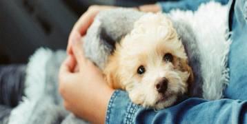 9 أسباب علمية تدفعك لتربية الكلاب