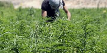 الإعلام العبري : هكذا يسيطر حزب الله على سوق المخدرات