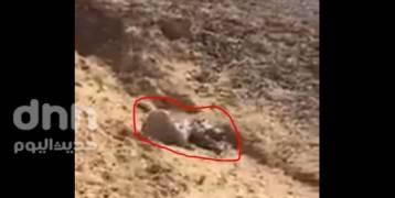 مصر : فيديو تصفية شاب صغير في وسط سيناء