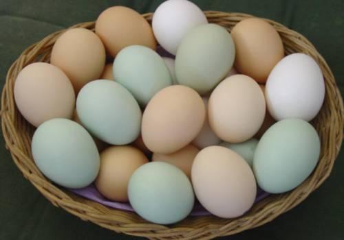 7 حقائق عن البيض لا تعرف عنها شيئاً.. هذه فترة صلاحيته والعمر الأنسب للطهي